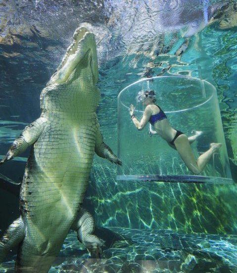Los 5 zoológicos más intensos del mundo
